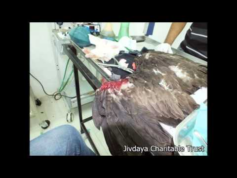 Tuta Tuta Ek Parinda (Save Birds during Uttrayan) 2014