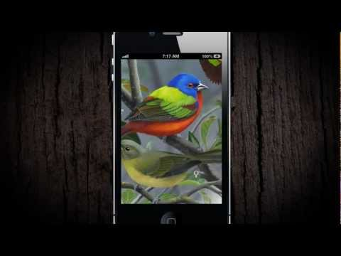 iBird Pro Birds North America APK Cover