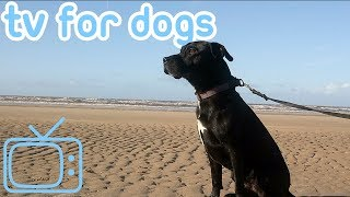 Dog TV! Keep Your Dog Entertained and Happy with Videos for Dogs!