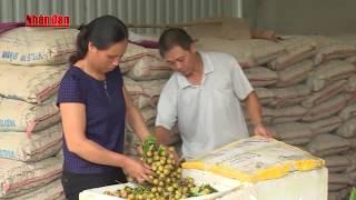 Xúc tiến xuất khẩu nhãn Sơn La ra thị trường quốc tế