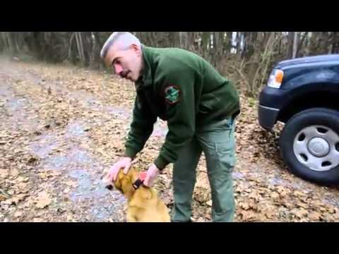 TWRA uses dogs help catch poachers