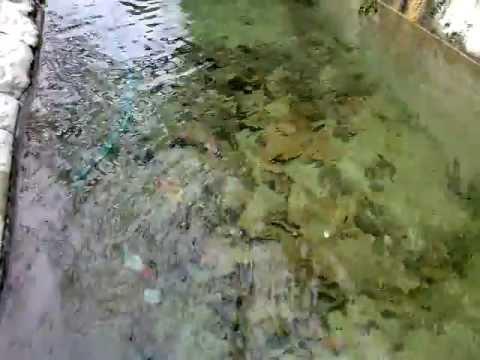 Il rumore dell'acqua: fontana di paese