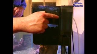 Cichlid Aquarium FILTER Maintenance