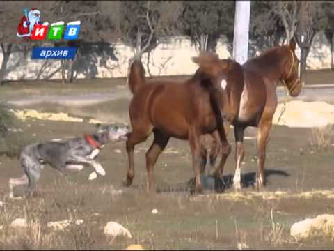 Разобрали стену сарая по кирпичам и украли 3-х лошадей