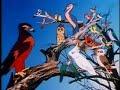 images Postman Of Birds