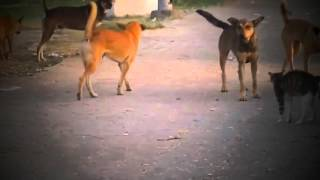 Best Cat Videos - Cat Vs Dog Part 7