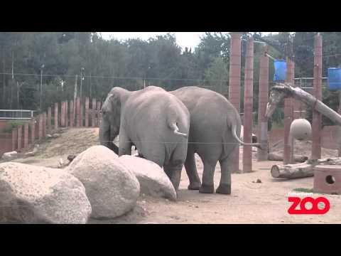 Зоопарк, Майк Науменко - D K