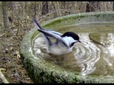 Birdbath SloMo 040515