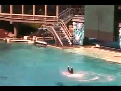 Killer Whale Attacks at Sea World! UNCUT VIDEO!!!!!