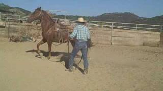 Working with the spoiled horse,David Lee Archer
