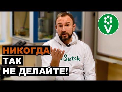 ТОП-10 ВРЕДНЫХ СОВЕТОВ для огородников