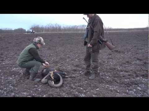 Lov muflona CZ557