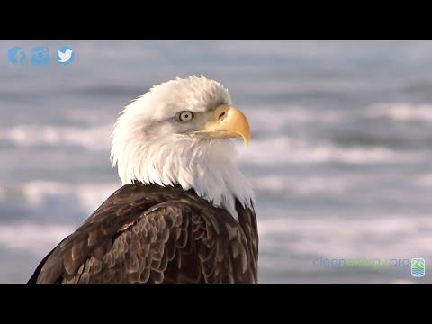 Offshore Wind Energy & Birds Can Coexist