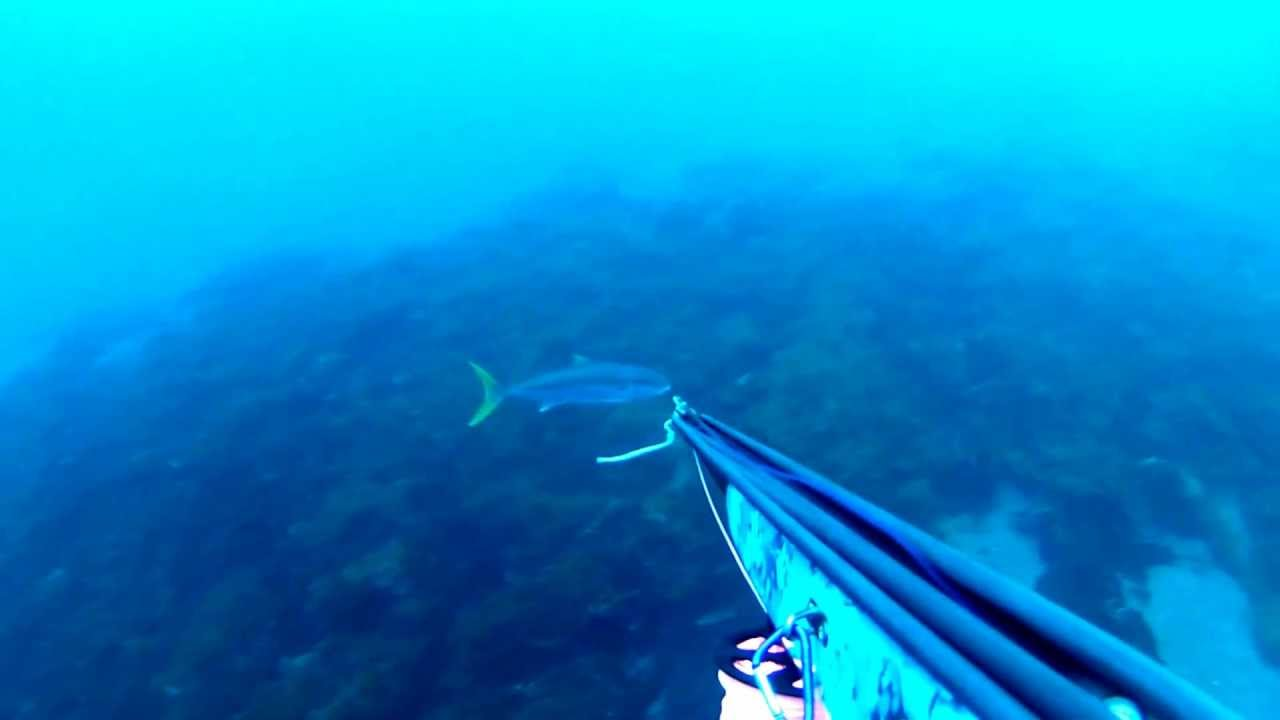 Spearfishing Yellowtail in So Cal (San Clemente Island ...