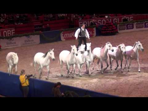 LORENZO'S HORSES @ STOCKHOLM HORSE SHOW 2011; BASSHUNTER