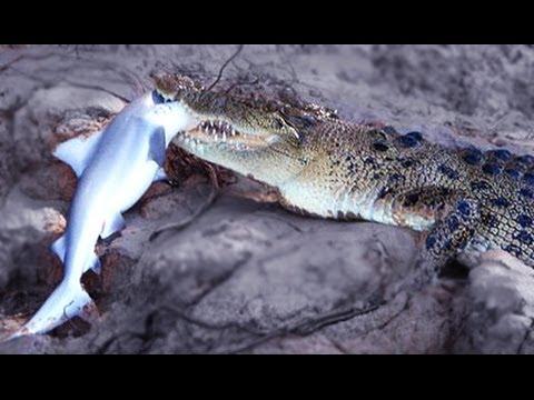 Crocodile Attack Compilation #HD