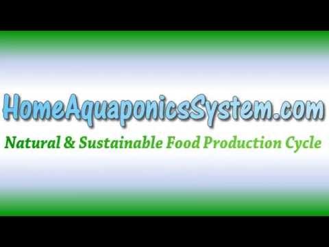 Essentials for Building a Cheap Home Aquaponics System