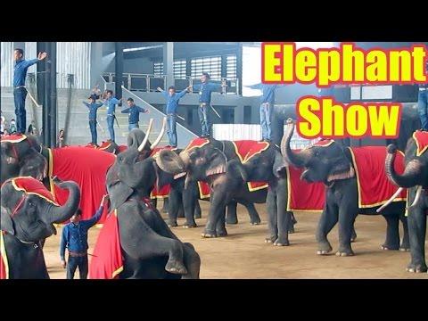 PATTAYA ELEPHANT SHOW FULL VIDEO   Thailand's Elephants Got The Talent