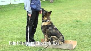 Dog Obedience Training - Positive Methods / K9 Ambassador
