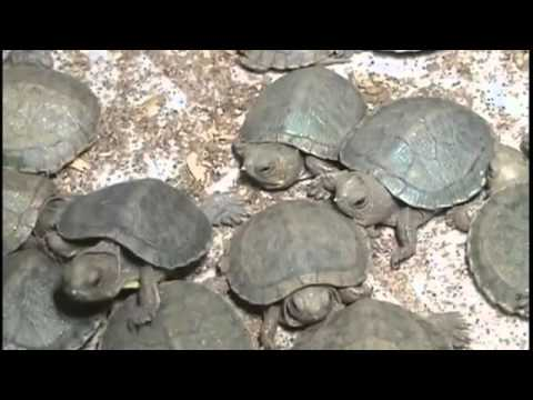 Turtles Found In Luggage At India Airport