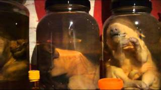 Freak Deformed Animal Private Collection Tour.wmv