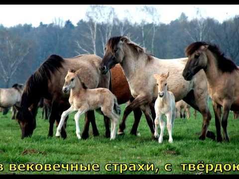 Владимир Высоцкий   -  Заповедник (Бегают по лесу стаи зверей)