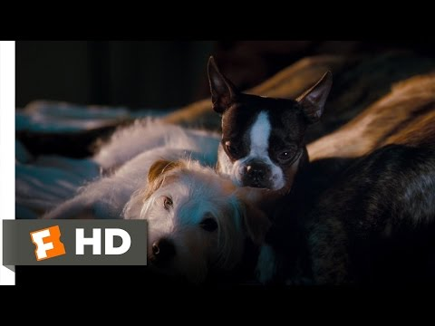 Hotel For Dogs (4/10) Movie CLIP - Better Here Than The Pound (2009) HD