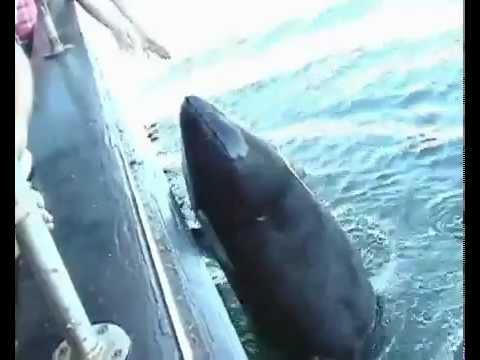 видео касатки и рыбаки