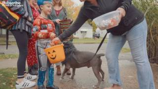 "Kids Meet ""Aggressive"" Pit Bull Rescue Dog ✔"