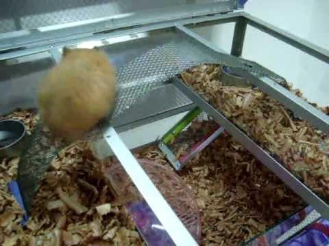 Casita para hamster