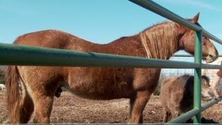 Horse meat could be coming back to U.S.   3/2/13