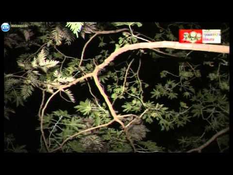 Jicho Pevu - Jaramandia la uhalifu