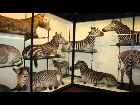 Tring Zoological Museum Hemel Hempstead Hertfordshire