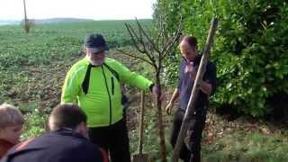 Environnement : planter des arbres fruitiers en ville