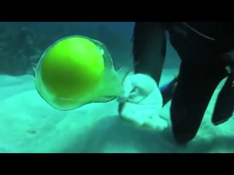 Ve lo que pasa cuando rompes un huevo debajo del agua