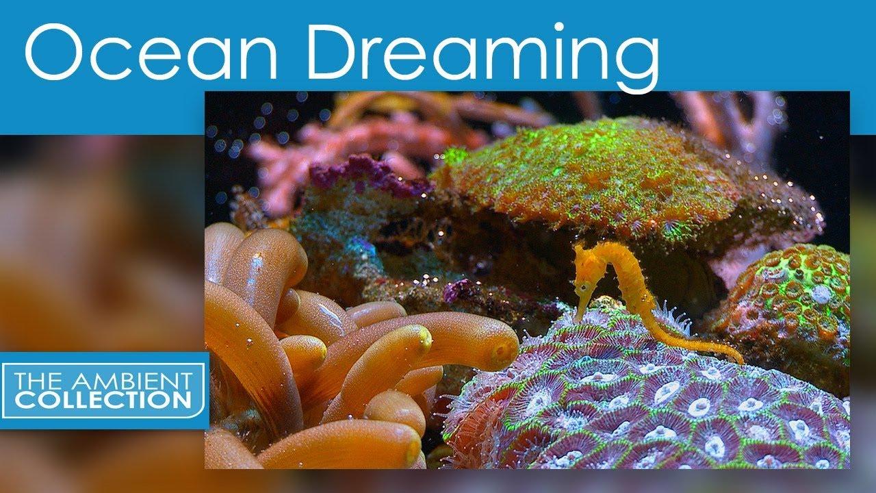 Ocean dreaming DVD - Relaxing scenes of the underwater ...
