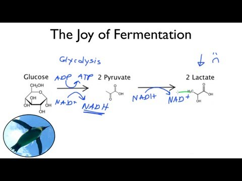 The Joy of Fermentation