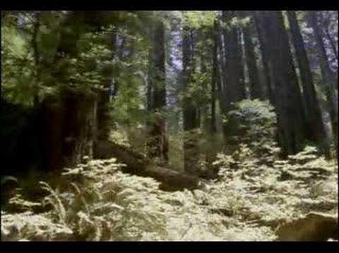 Kung fu meditation youtube