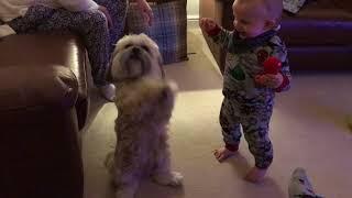 Baby Laughing at Begging Dog