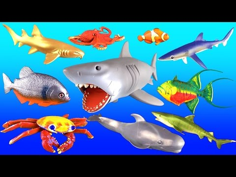 Giant Shark Whales & Fish | Kids Surprise Toy Collection | Learn Names & Fun Facts in English