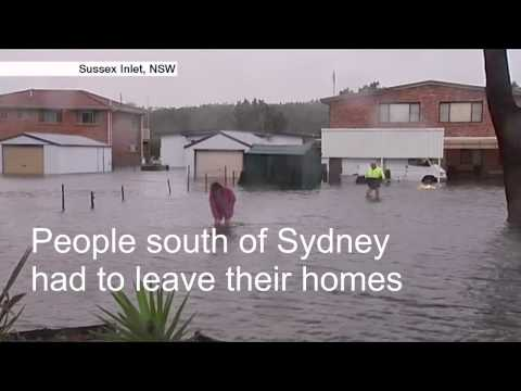 Australia  NSW floods force people and animals to flee   BBC News 1