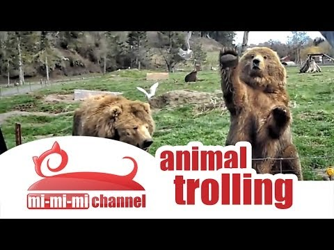 Funny animals troll compilation  best animal jokes and pranks