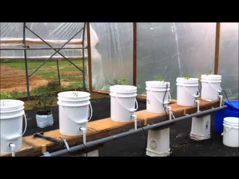 Dutch Bucket   Greenhouse Hydroponics Update
