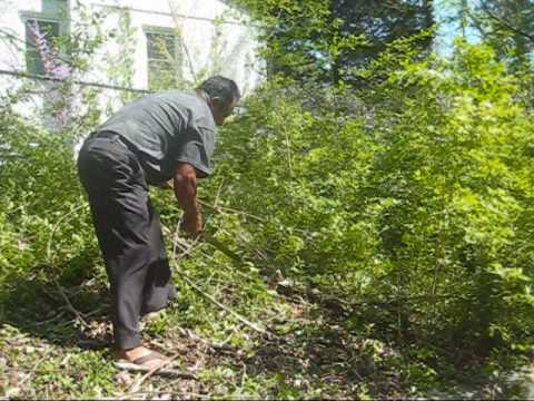 How to Clear Brush with a Machete