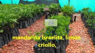 viveros en Norte de Santander el nogal y el zulia