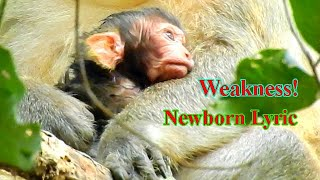 BOTH MUMMY AND NEWBORN LYRIC STILL WEAKNESS AFTER GAVE BIRTH, BABY LYRIC SO ADORABLE BABY MONKEY