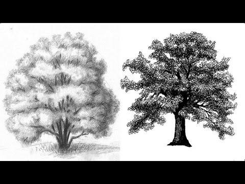 Видео как нарисовать яблоню карандашом поэтапно