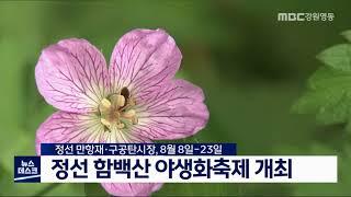정선 함백산 야생화 축제 개최