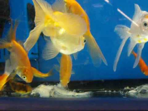 Walmart Fish Exposè Music Videos
