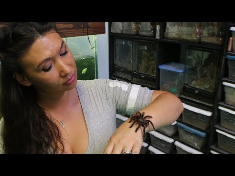 Handling Tarantulas, a touchy subject, Viewer Request by the Deadly Tarantula Girl
